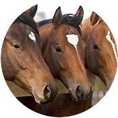 , equinos, Nutran
